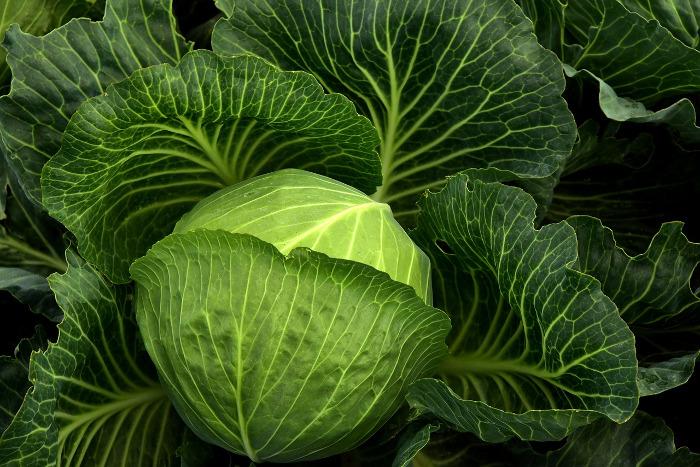jak gotować warzywa kapustne